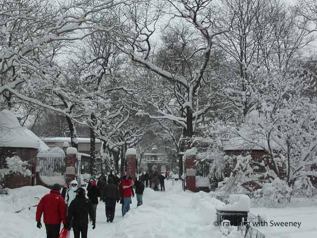 """Central Park after a heavy New York City snowfall"""