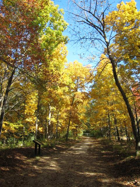"""""""Autumn leaves on trees alon Battle Road Trail at Minuteman National Park"""""""