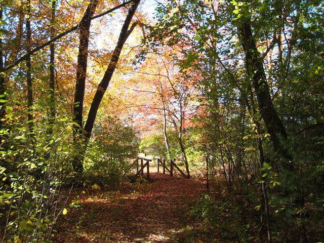 """""""Battle Road Trail at Minuteman National Park in the fall"""""""