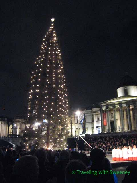 Norwegian Pine at Trafalgar Square