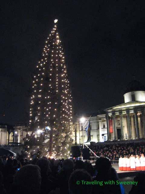 Norwegian Pine at Trafalgar Square