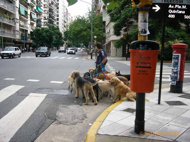 Dog walker in Buenos Aires, Argentina