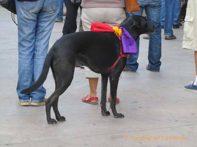 Dog at protest