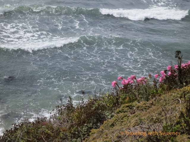 Flower on the cliff on the Pacific Ocean