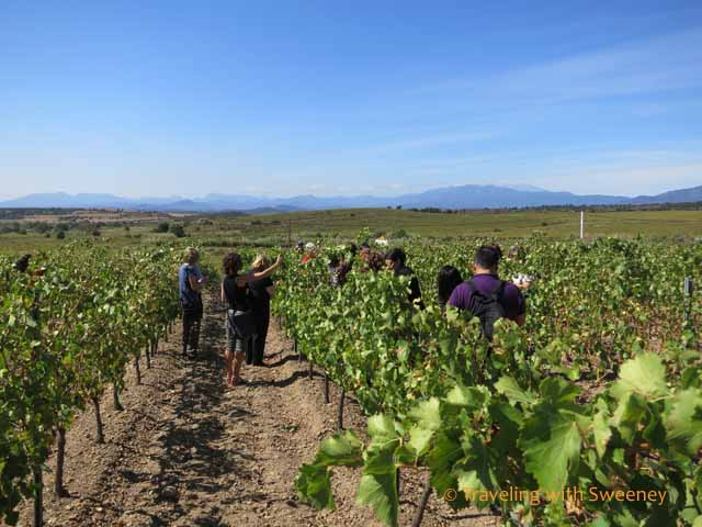 Bloggers in the Vineyard