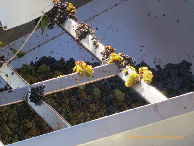 Grapes into the Crusher