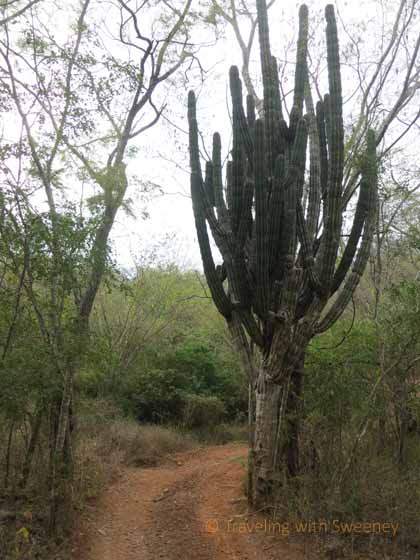 """Where the Desert Meets the Jungle near Mazatlan, Mexico"""