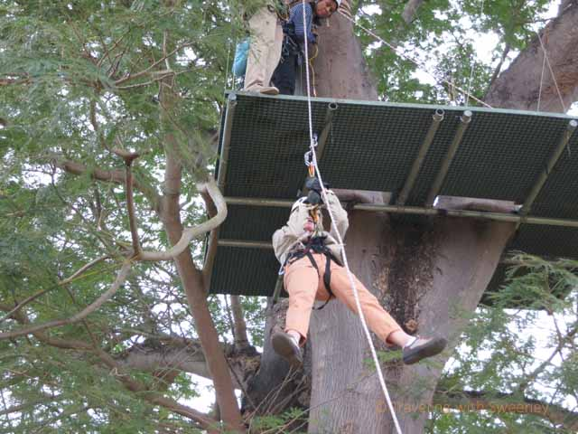 """Rappelling from the Final Platform at Huana Coa Canopy Adventure"""