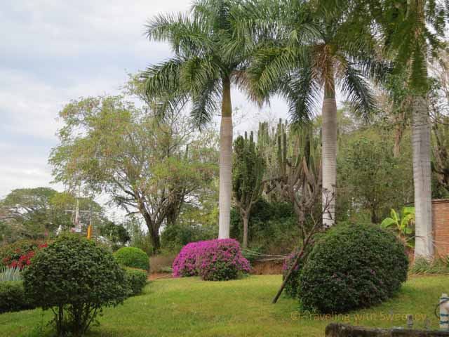 """""""Palm trees and flowers on the grounds of Los Osuna tequila factory in Sinaloa, Mexico"""""""