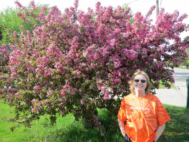 """Lots of blossoms on tree in Wisconsin in the spring"""