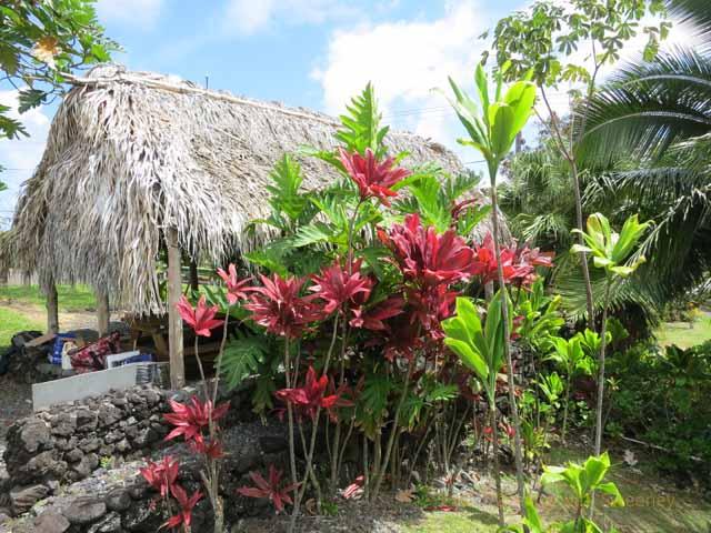 """""""Kauhale O Hana Hawaiian living compound where hale building competition team was at work, Maui 2013"""""""