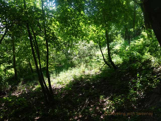 """Into the woods near Portico di Romagna for truffle hunting"""