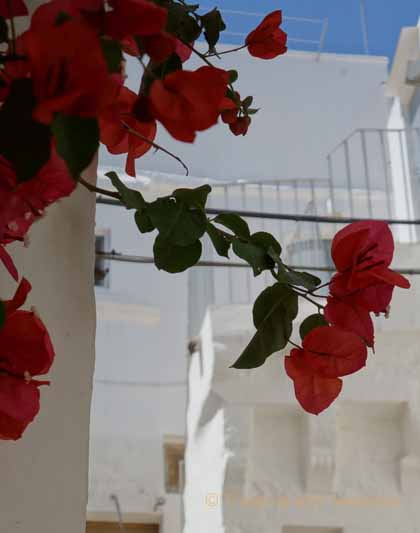 """Red bougainvillea against the whitewashed buildings in Cisternino, Italy"""