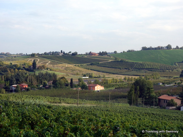"""Vineyards of AltaVita Winery in Cesena, Italy"""
