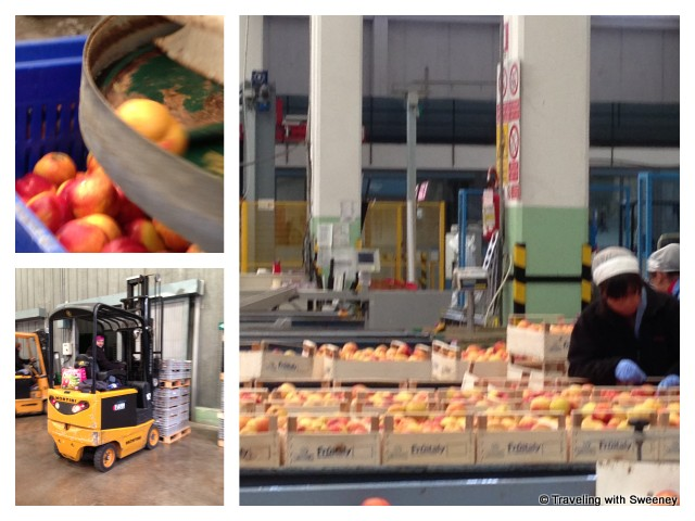 """Inside the APOFruit Processing Plant in Cesena, Italy"""