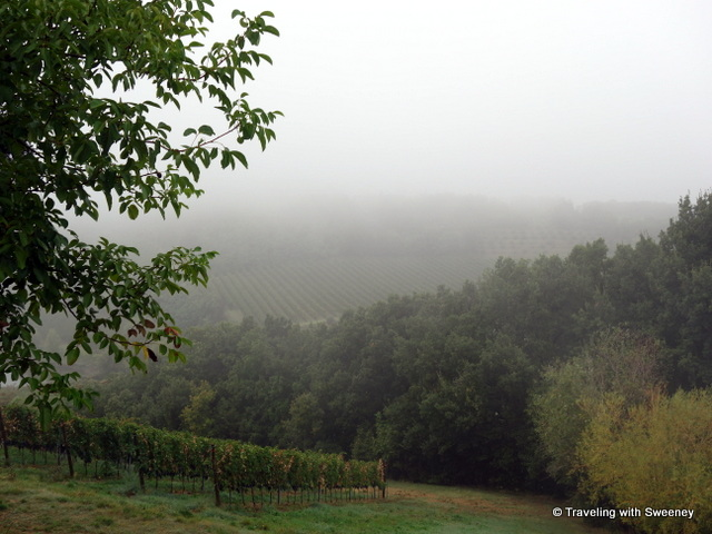 """Vineyards and trees cover the hillside at Tenuta Masselina, Emilia-Romagna, Italy"""