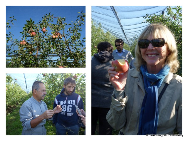 """In the orchard with owner, Piercarlo Fantini and Antonio Zampiga of Forli-Cesena Legacoop"""""