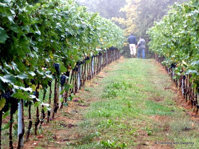 """""""Riccardo Castaldi and Alessandra Catania walking in the vineyard at Tenuta Masselina, Castel Bolognese, Italy"""""""