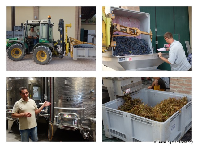"""Part of the wine-making process, destemming and fermentation at Altavita winery in Cesena Italy"""