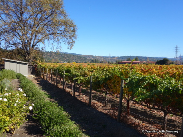 """""""Vineyards in Napa Valley on a sunny fall day"""""""