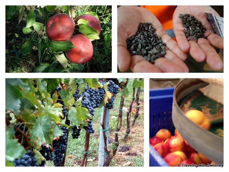 """""""Agriculture of Emilia-Romagna, Cesena, Italy"""""""