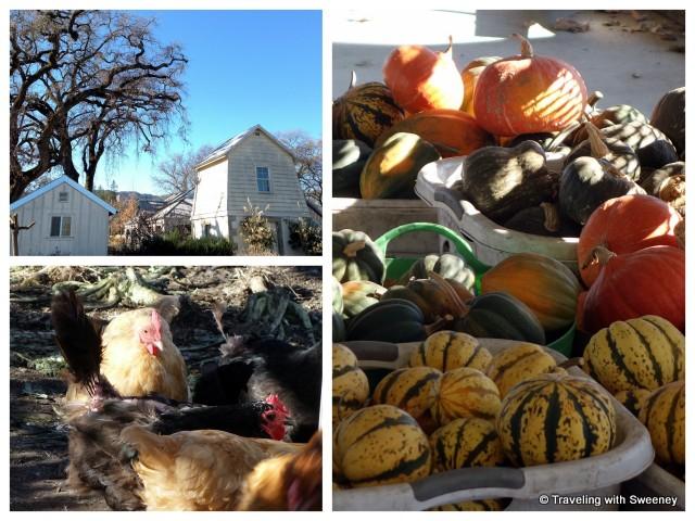 """Tank house, garden vegetables, chickens"""