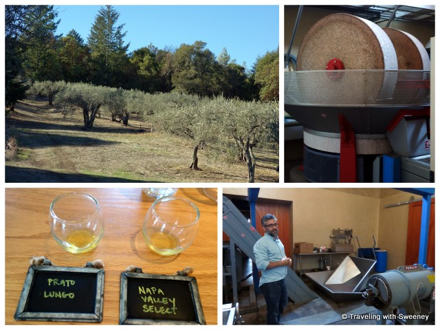 """Long Meadow Ranch olive grove, frantoio and olive oil tasting"""