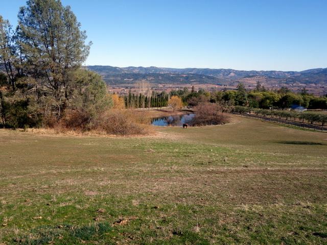 """Picturesque scenery of Long Meadow Ranch Mayacamas Estate, Napa wine country"""