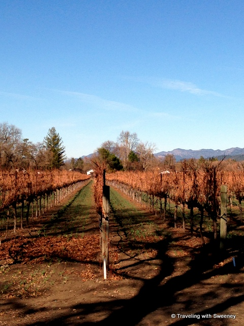 """Sauvignon Blanc vineyards at Long Meadow Ranch's Rutherford Estate, Napa"""
