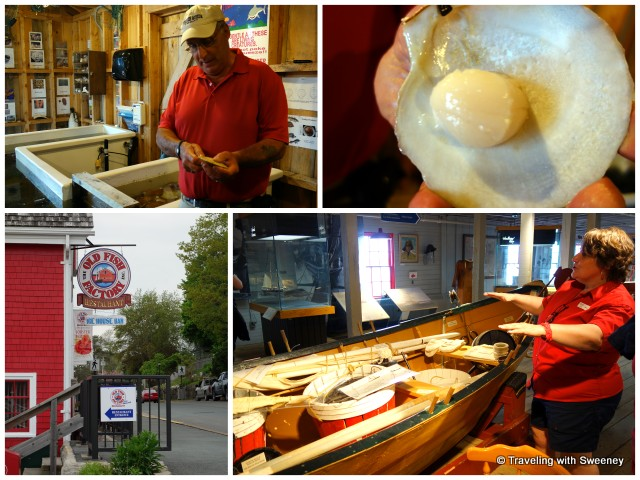 """Shucking scallops, raw scallop, Fisheries Museum, Old Fish Factory restaurant, Lunenburg, Nova Scotia"""