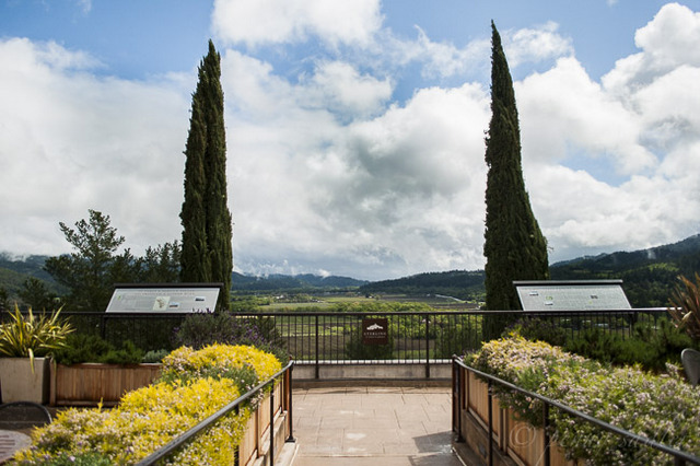 """A beautiful day in the Napa Valley on the terrace at Sterling Vineyards"""