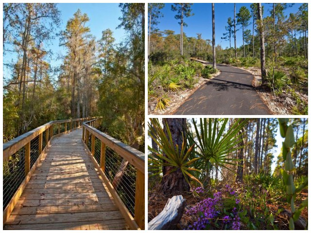 """""""Trails for hiking and biking in Conservation Park, Panama City Beach, Florida"""""""