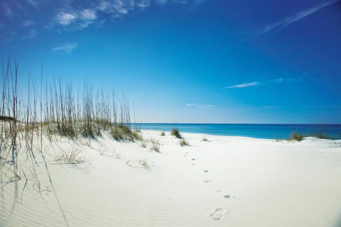 """""""The white sand of Shell Island between the Gulf of Mexico and St. Andrews Bay, Florida"""""""