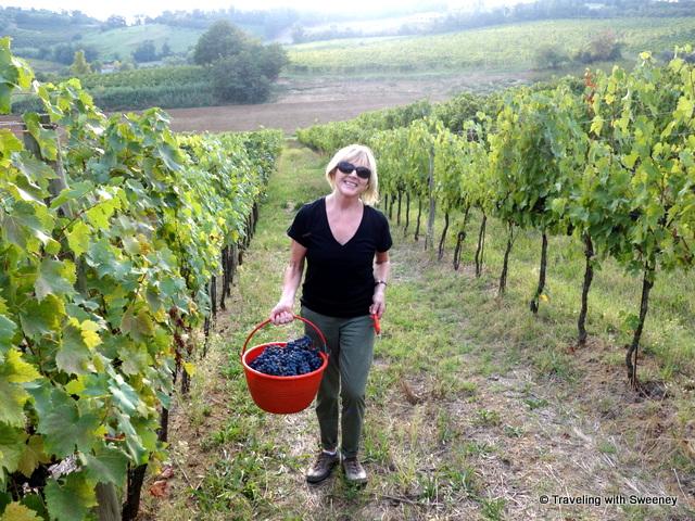 """Walking through the vineyards of Alta Vita Winery in Cesena, Italy"""