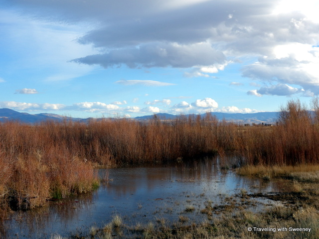 """Peaceful scene along the River Fork Ranch Trail in Carson Valley, Nevada"""