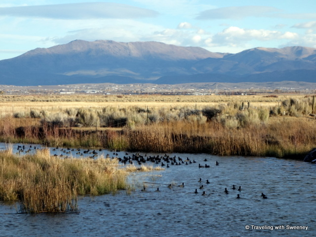 """Waterfowl at the confluence of two branches of the Carson River, Nevada"""