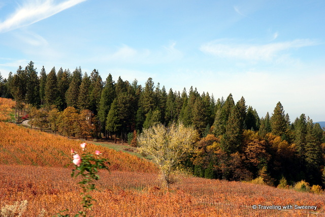 """Vineyards of El Dorado County in the fall"""