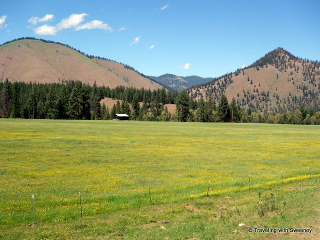 A lone building in a meadow full of wildflowers with a backdrop of mountains and big sky