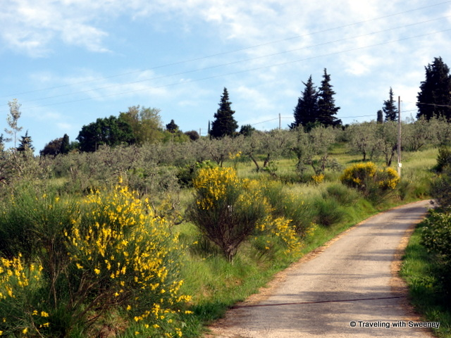 Leaving La Novellina on the gravel driveway lined with wildflowers