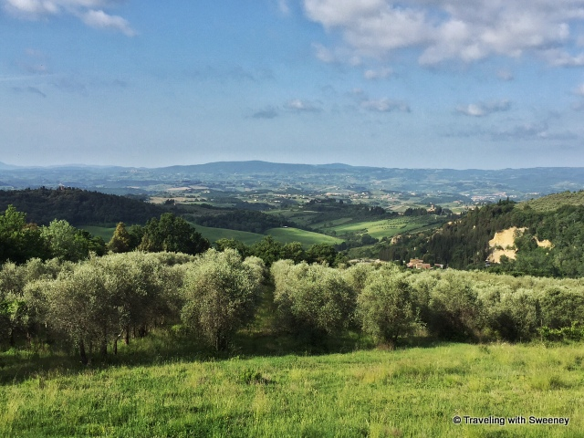 Olive groves of La Novellina overlooking the Val d'Elsa