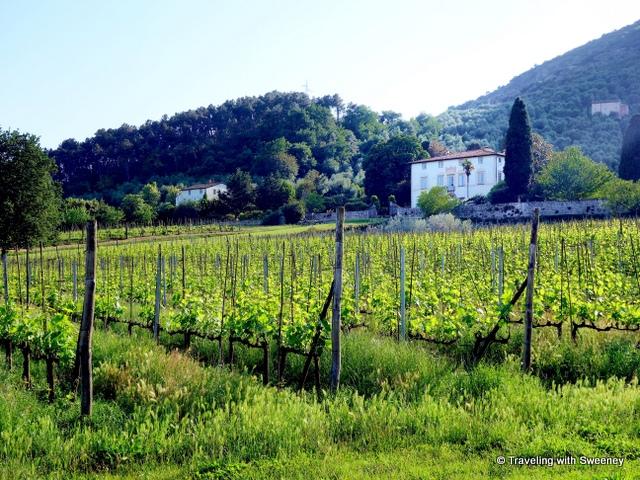 Buonvisi Estate, Lucca