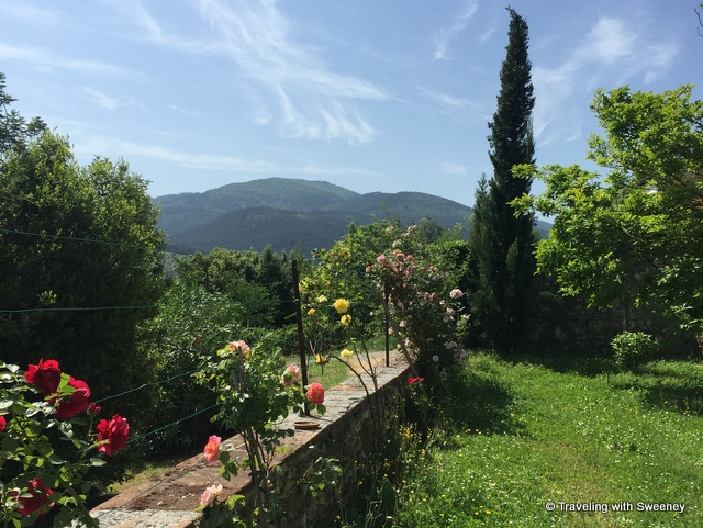 Roses in bloom with a mountain backdrop on the grounds of Villa Buonvisi in Lucca, Italy