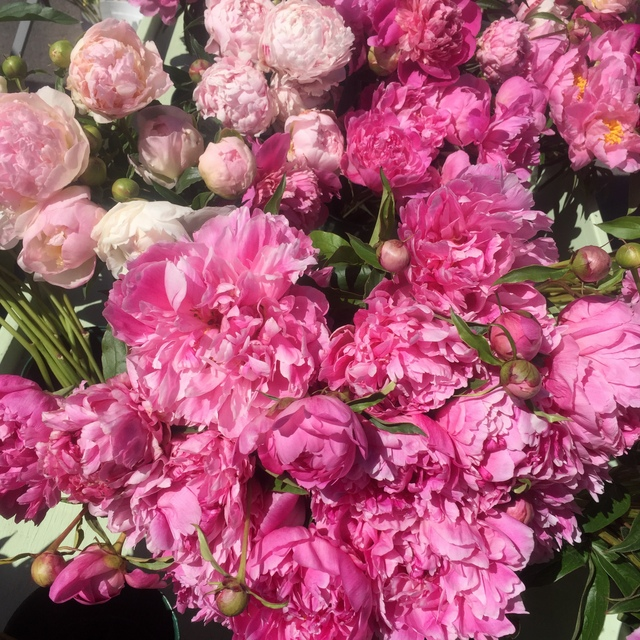Peonies at farmer's market in Missoula, Montana