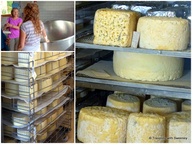 Touring the cheese factory with Arianna; luscious cheeses on racks at Corzano e Paterno in San Casciano, Italy