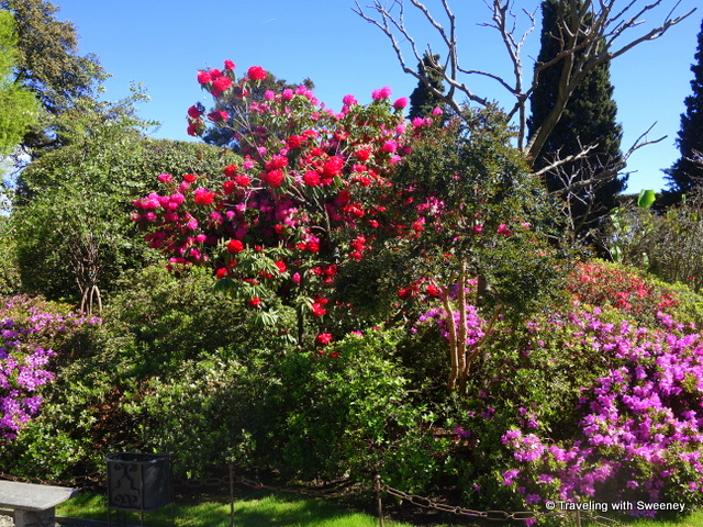 Bursts of colorful blossoms on the trees of Isola Bella