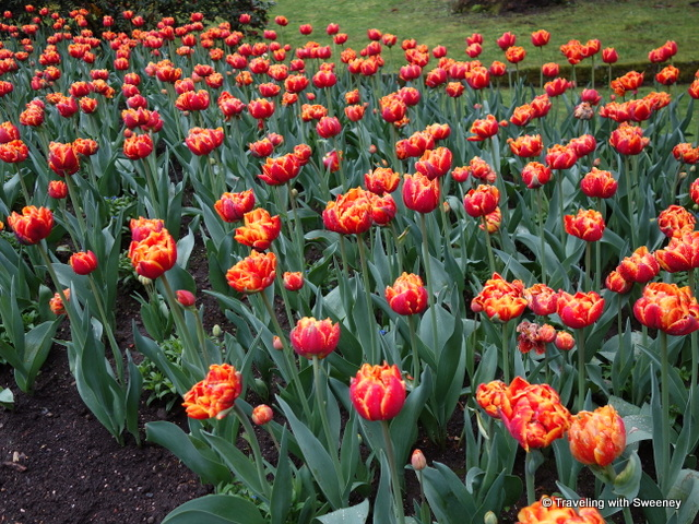 Red and yellow tulips of Villa Taranto in April, one of the beautiful gardens of Lake Maggiore, Italy