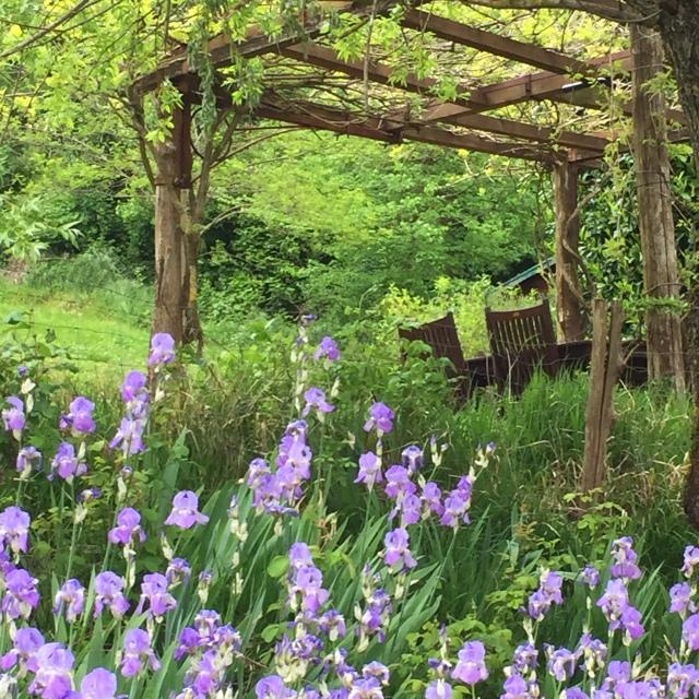 Irises in bloom at Torre Fantini in Tredozio, in the Emilia-Romagna region of Italy