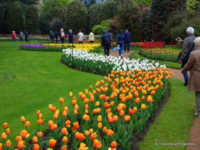 Walkway through the tulips