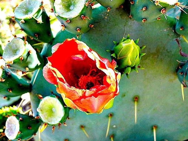 Desert Botanical Garden in Phoenix -- Photo by Julie Cohn