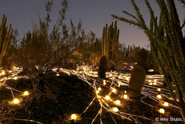 Night lights at the Desert Botanical Garden in Phoenix